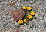 desert &flowers