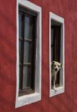 Twin windows and dog