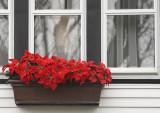 Seasonal Window Box