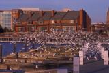 No Boats at  the Marina
