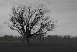 Oak Tree at the Park