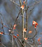 november flovers