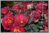 ...roses