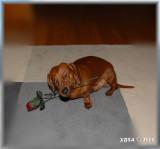 Mr Valentine.... continued