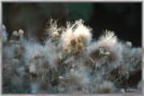 fuzzy