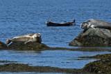 Phoques_Parc National du Bic_Seals