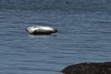 Phoques_Parc du Bic_Seals