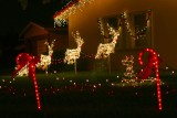Christmas Sensations