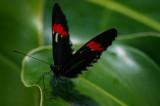 Butterflies, Flowers & Birds