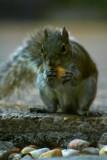 Got a peanut!