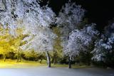 california_snow