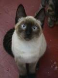 richard_delucas_cat
