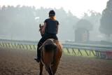 Solitary horseman.