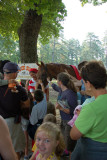 Kids petting the old, drugged horse.
