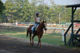 Another horse and rider.