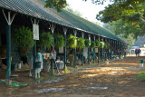 Hmmm...more stables.