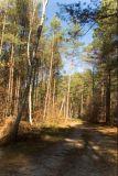 Narol's  forest