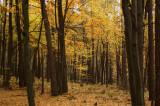 Werchrata mixt forest