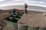 Stabilizing the beach