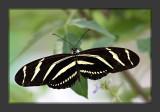 Zoo Butterflies
