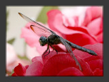 Dragonfly on an artificial flower