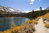 Foot Trail by Rock Creek Lake
