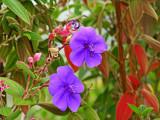 Kula Botanical Gardens and the Lavender Farm