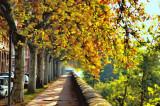 automnek.jpg
