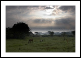 Daybreak at Raglan