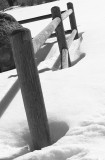 BW fence posts in snow -IV.jpg