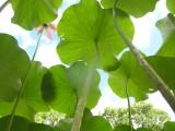 Lotus_Upview.jpg