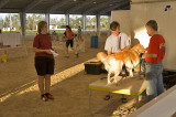 West Palm Beach, measuring dogs for the show