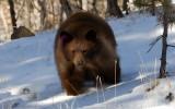 Bear Cub Gets a New Lease on Life