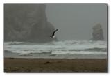 Morro Bay as the Fog Lifts