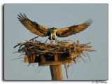 Female Returning to Her Nest