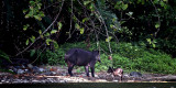tapiers