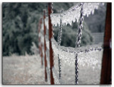 Barb Wire Ice
