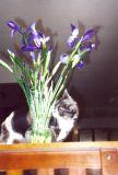 Something Smells Flowery