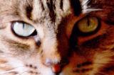 Juliet's Eyes