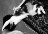 Hazards of Indoor Wildlife Photography (Part 2)