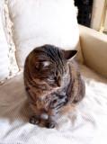 elder statescat