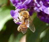 Bee Shot One