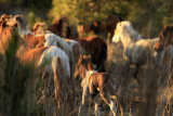 [APRIL 2007] As the herd begins its run to a safer location, the new foal tries to keep up.