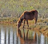 chincoteague 5.jpg