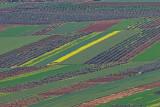 late_spring_in_israel__poppies 10.jpg