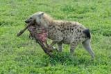 More Mammals from Tanzania