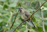 More Birds from Tanzania