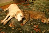 Lu and Yogi