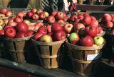 Fall apples at roadside stall, rural PA