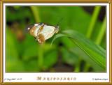 DSC_3779_mariposario1.jpg